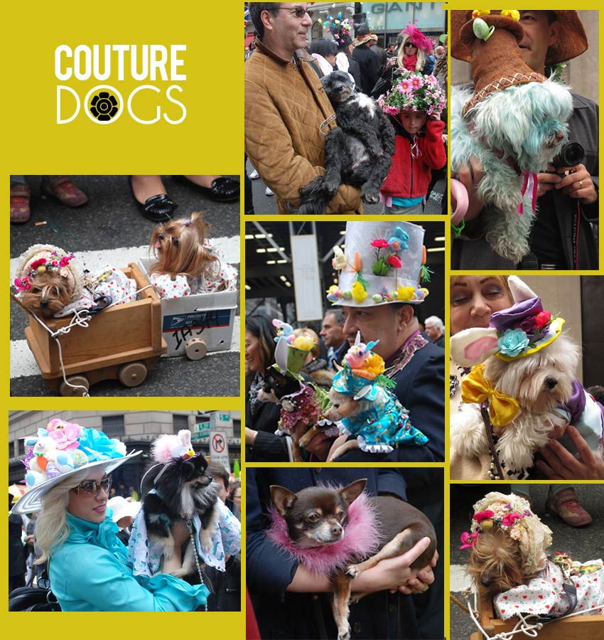 NYC Easter Hat Parade Dogs