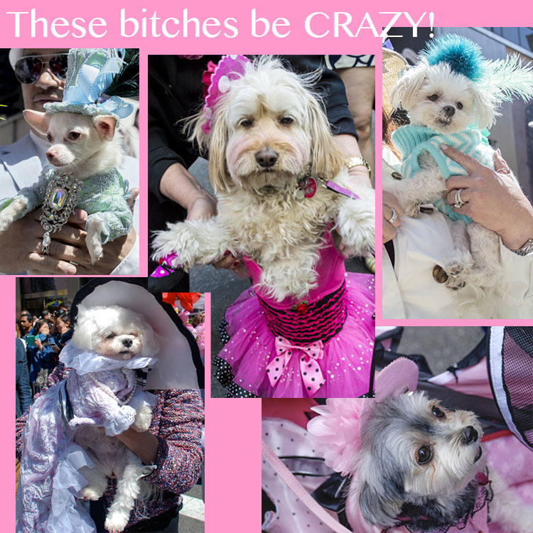 best dog costumes NY Easter Hat Parade 2014